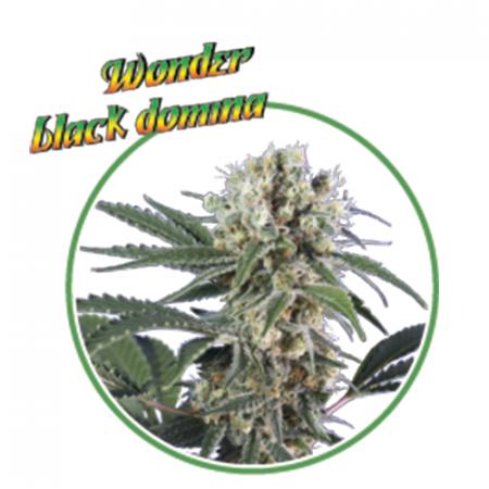 WONDER BLACK DOMINA (3 semi) - MaryMoonlight