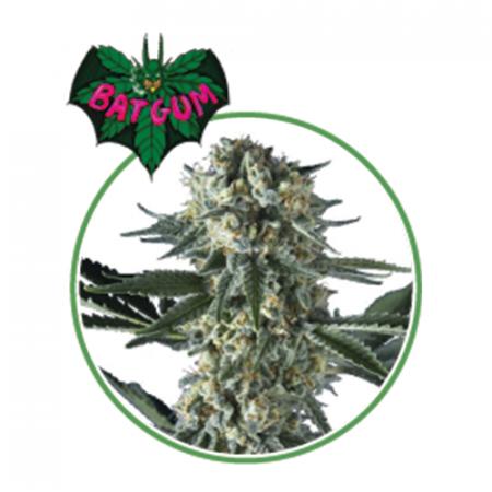 BAT GUM (3 semi) - MaryMoonlight