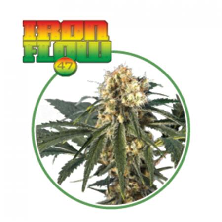 IRON FLOW (3 semi) - MaryMoonlight